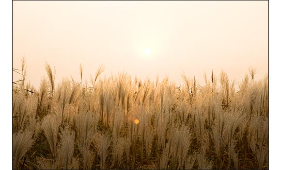 백제의 숨결이 어린 유네스코 세계유산 공산성